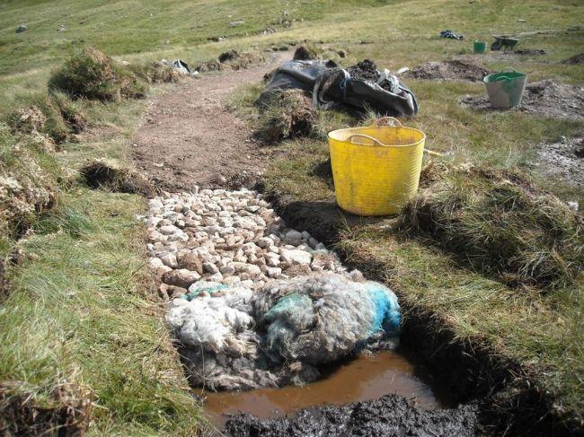 Sheep fleece path repair